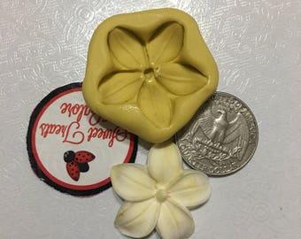 Frangipani hawaiian flower