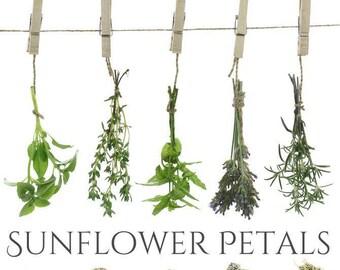 DRIED SUNFLOWER PETALS, Helianthus annuus, Common Sunflower,Wild Sunflower, Sonnenblume, Girasol, Tournesol, Beesbotanics Sunflower Tincture