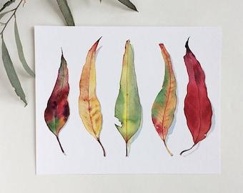 A4 print or 8x10 art print: eucalyptus leaves horizontal print - gum leaf botanical illustration multicolor print - colorful wall art print