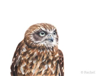 "8x12"" Southern Boobook Owl - Australian Birds - Wildlife - Owl Print - Woodland Nursery Prints"