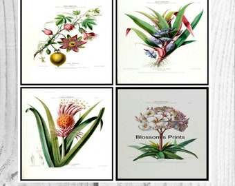 Set of four Flore D'Amerique Floral prints from the 1800's