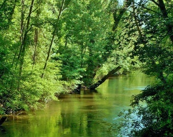 LAZY RIVER--Nature Photography, Michigan Photography, River, Summer, Water Reflections, Trees, Woodland, Picture of River, Michigan Rivers