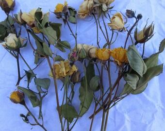 Dried Flowers Dry Mini Rose Bud Stem Yellow Beige Miniature Flower Crown Wreath Floral Bouquet Romantic Rose Wedding Card Embellishment Bulk