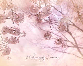 Flower decoration, Flower photography, Floral sticker, Fine Art Print, Blush, Pastels, Felted decor