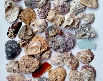 45 Natural Seashells, Sea Glass, Craft Seashells, Home Decor Shells