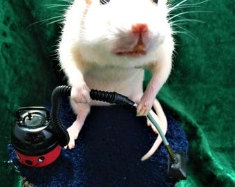 Taxidermy Hoovering Rat - weird, curio, novelty, gift, henry hoover, house work, goth, present