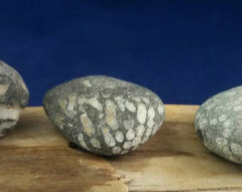 3 x Fossils from Seaham by SeaFindsScotland English Fossils Rock Fossils Prehistoric Fossils English Beach Finds Collectible Fossils