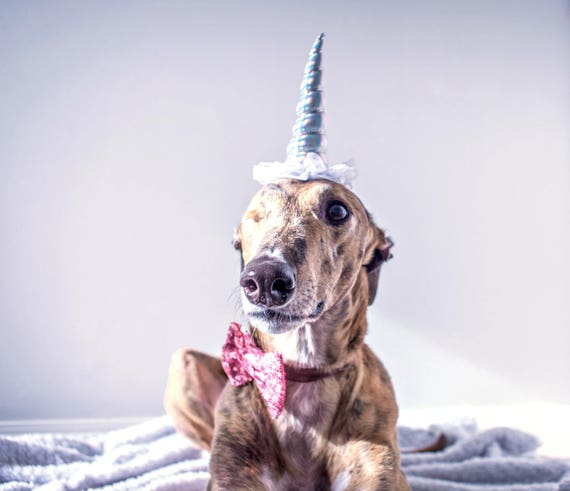 Unicorn Headband ||  Unicorn Costume || Dog Unicorn || Unicorn Dog || Pet Dress Up