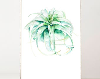 Air Plant Print, Watercolor Print, Succulent Print, Botanical Watercolor, Tillandsia xerographica, Tropical Plant Print, Boho  Wall Decor
