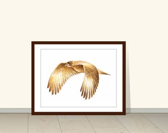 Hawk Art Print, Print of Watercolor Painting, Animal Wall Art, Watercolor Illustration, Wall Art, Wall Decor, Bird Art, Art Print, Wildlife
