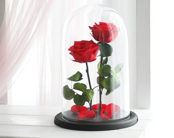 Two Beauty and the beast roses(Large), Mother's day gift, Enchanted Rose, Rose in glass dome, Forever red rose, Rose in Glass,preserved rose