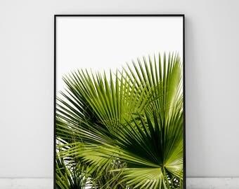 Green Palm Leaves, Green Palm Leaf, Greenery, Green Tropical Print, Green Tropical Leaves, Coconut Palm Print, Green Leaves, Coconut Leaf