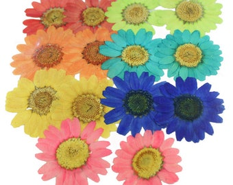 Pressed flowers mixed, marguerite 14pcs in red, green, orange, turquoise, yellow, blue, pink