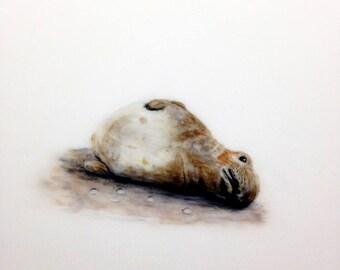 Seal, sea lions