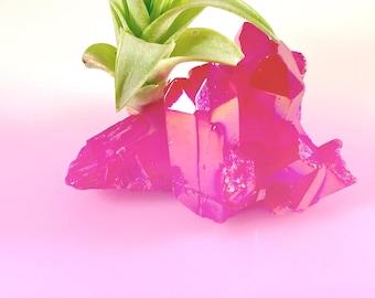 Bright Fuchsia Aura Quartz Crystal Air Plant Garden