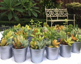 Succulent arrangement for Wedding bombonieres and party favours