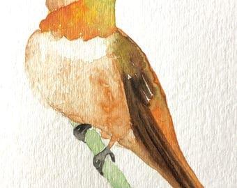 Original watercolor painting Bird wall art Hummingbird painting Hummingbird Art  Rufous Hummingbird Miniature painting  bird art