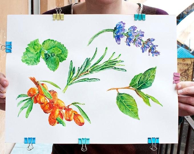 Sea Buckthorn Herbs Watercolor Art Herbs Wall Art Green Plant Wall Art Green Watercolor Art Plants Wall Art Floral Watercolor Plants Art