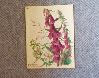 Genuine vintage framed botanical drawing, flower illustrations, botanical print, floral, in glass frame, red rose foxglove love