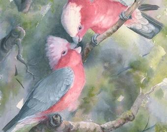 Galahs print of original watercolour painting, size A3 Australian bird art print, cockatoo painting print, wildlife painting print