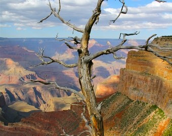 Branching off in the canyon - the Grand Canyon
