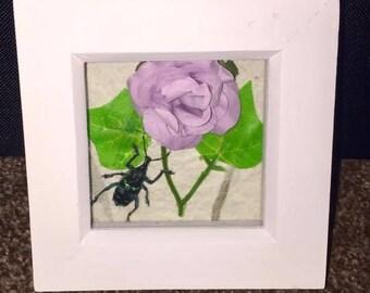 A stunning framed weevil beetle