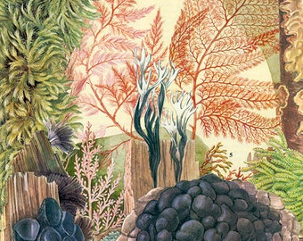 Limited edition giclée print of original collage 'Four; Character Studies in Plant Life'