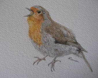 Royal Singing Robin