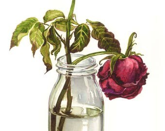 Rose watercolour, Red rose, Rose painting, Flower painting, Watercolour, Realistic painting, Original painting