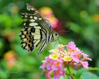 A Brief Encounter. Photography Print.
