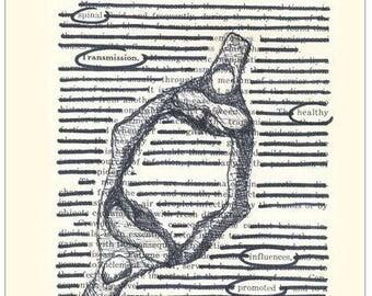 Chiropractic Atlas Sketch Poster