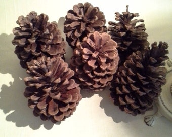 3 lb Large Box Bulk Natural Pinecones Pine Cones Arts Crafts Wreaths