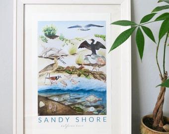 Sandy Shore: CA Coastal Habitat Print