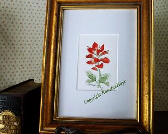 Indian Paintbrush Original Watercolor Texas Wildflower Painting ACEO Flower Floral Garden Housewarming Gift Miniature
