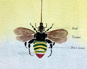 ORIGINAL WATERCOLOUR. The Bee's Knees / Anatomy of a Bee / Euglossa Dimidiata / Bumblebee / Puncyclopaedia Canadiana / Pun