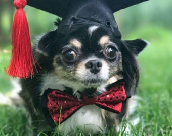 Graduation Cap for dogs and cats (with gold,red,green,blue, or purple tassel)