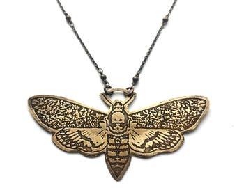 Brass Death's Head Hawk Moth