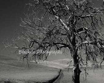 Black and White Tree Fine Art Print Tree Art Nature Photography Landscape Photo Lone Tree Wall Art Country Decor Solitary Tree Monochrome