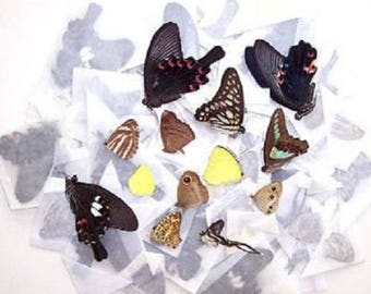 50 Butterflies Moths Wholesale Mix Lot Unmounted Wings Closed