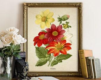 Dahlia Botanical Print, Dahlia Art Print, Dahlia Flower Print, Floral Home Decor, Vintage Natural History Art, Dahlia Art Reproduction FL125