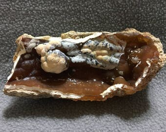 Fossilized Coral Botryoidal Piece 8-10-2-17