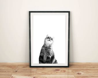 Cat print, Wall art, Black and White photography, Wall decor, Digital Download