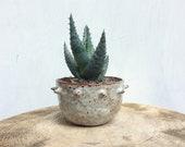 Spiky Ceramic Planter - Handformed - Succulent or Cactus Planter - Handmade Pottery - Ready To Ship