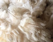 DERBYSHIRE GRITSTONE, Dale O Goyt,  Rare Breeds Raw Wool, Unwashed, Second Quality, Hand Sheared, from Yorkshire Flock