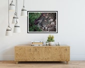 Rainforest Picture, Tropical Art, Forest Photography, River Art, Rain Forest Decor, Picture of Forest, Botanical Print Jane of the Gorge