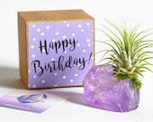 Amethyst Crystal Happy Birthday Gift Girlfriend Birthday Best Friend Birthday Mom Birthday, Air Plant Aunt Birthday Gift