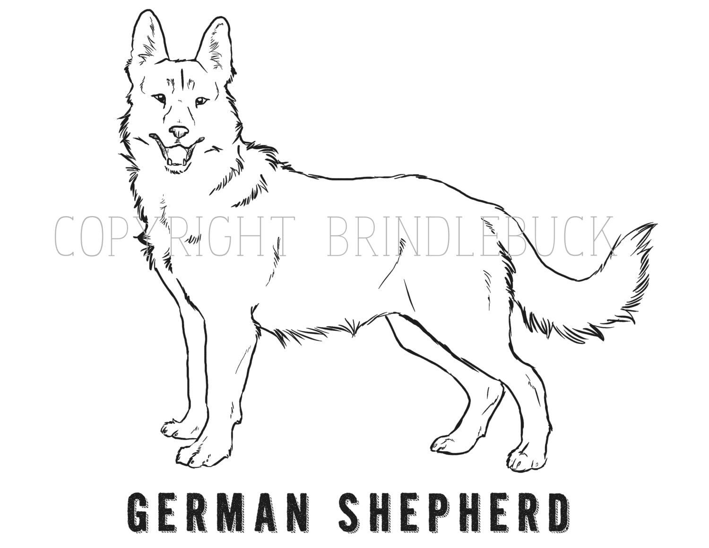 German Shepherd coloring page  Coloringcrewcom
