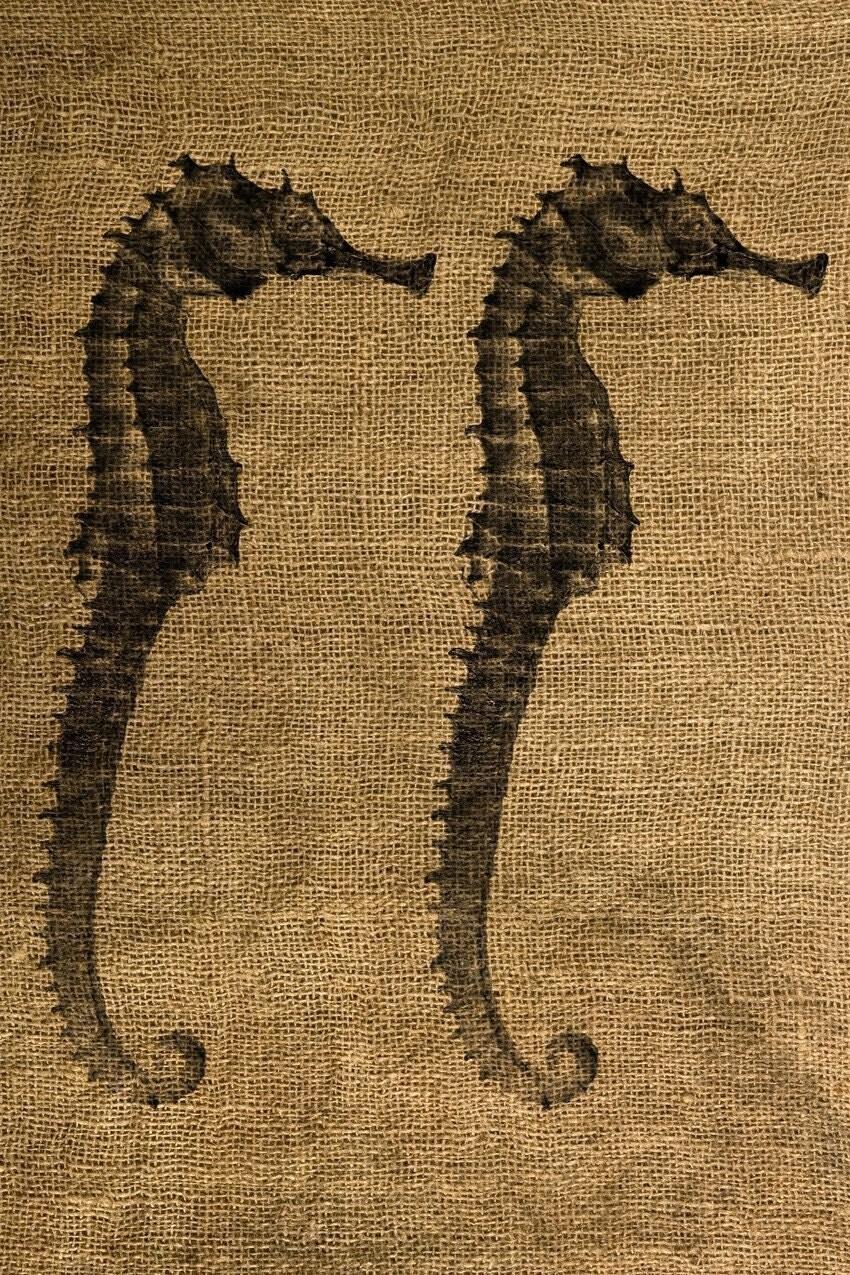 Vintage Seahorse illus...