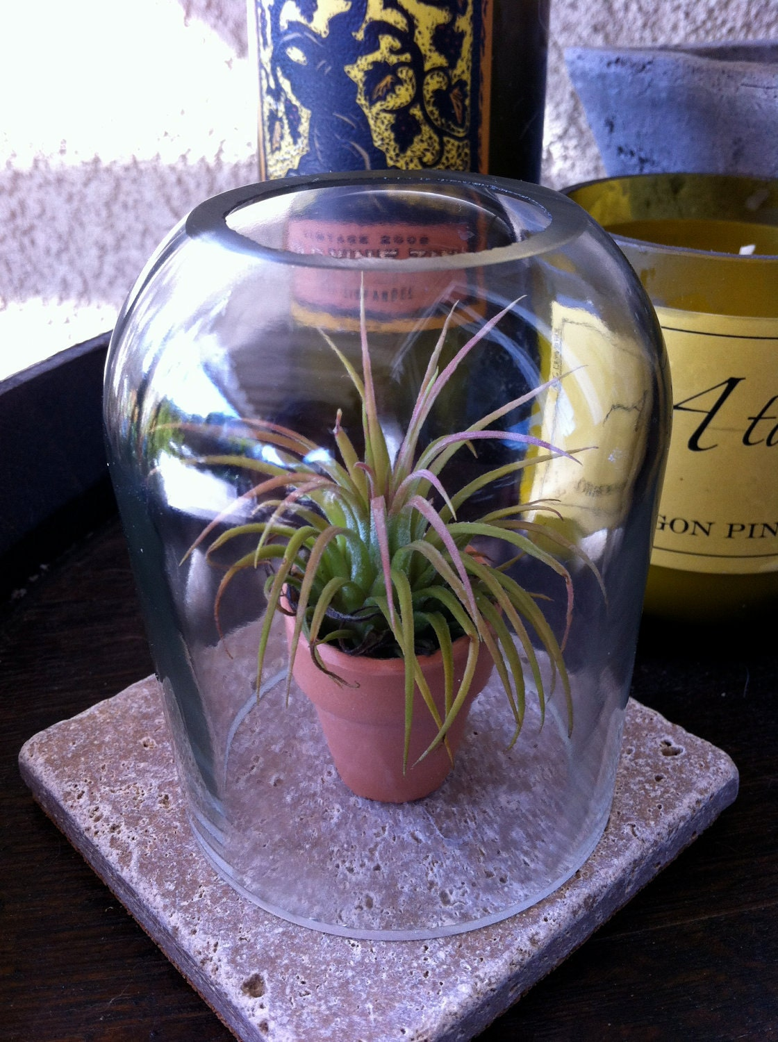Recycled Wine Bottle Terrarium with Ionantha air plant in terra cotta pot