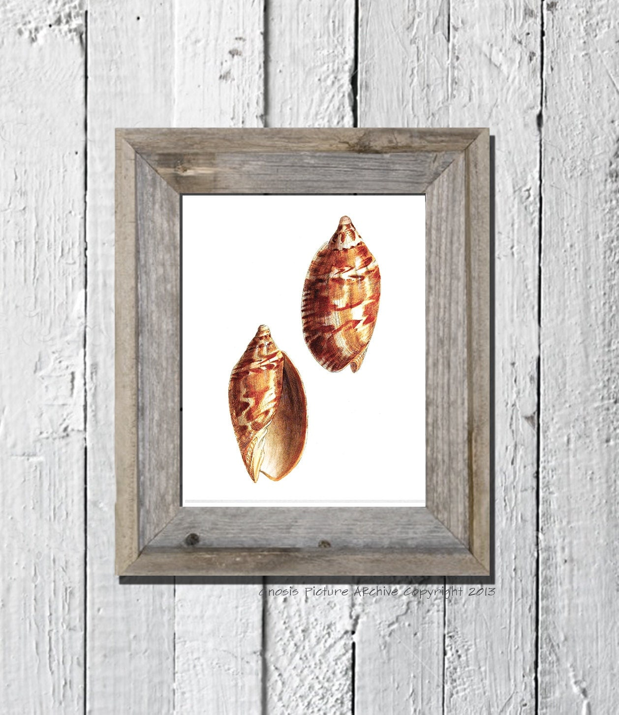 Popular items for sea life wall decor on Etsy